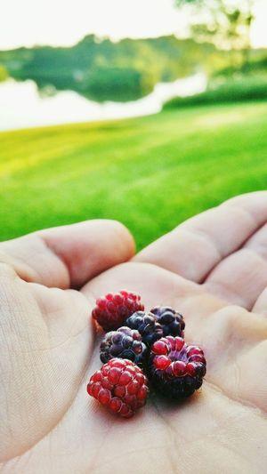 Juxtaposition Fruit Berries Hand Lake Grass Focus On Foreground Enjoying Life Taking Photos Check This Out Eyeem Photo