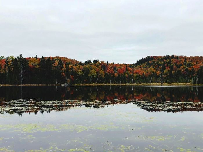 Laurentides - Automne 🍁 Reflection River Picoftheday Autumn Nikonphotography Nikon EyeEm Nature Lover EyeEmNewHere Plant Water Tree Sky Reflection Lake Tranquility Scenics - Nature Beauty In Nature Nature No People Tranquil Scene Waterfront Day Cloud - Sky Outdoors Non-urban Scene Idyllic Growth