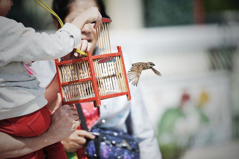 Family releasing bird from cage