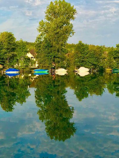 Reflection Tree Water Plant Lake Waterfront Sky