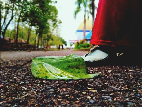 I wish, in every single step that I have do, I should be close to Him. Greatful for each of his gifts. Be patient when He give me temptation. It's a very simple Wish, but it's the real happiness I think :) Close-up Day Green Color Leaf Outdoors Tree Nature Kantor Gubernur Kendari Indonesai Akhwat