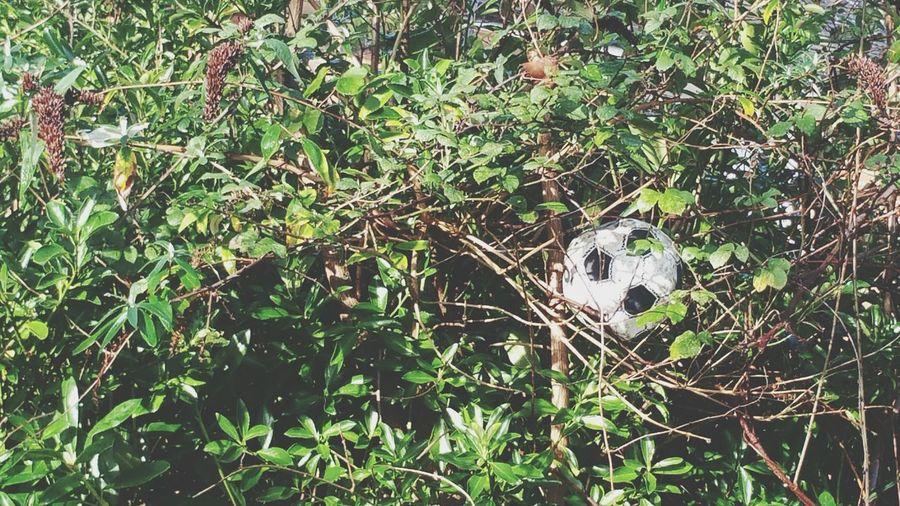 Football Lost Trees Leaves Lost Football canihavemyballbackpleasemr