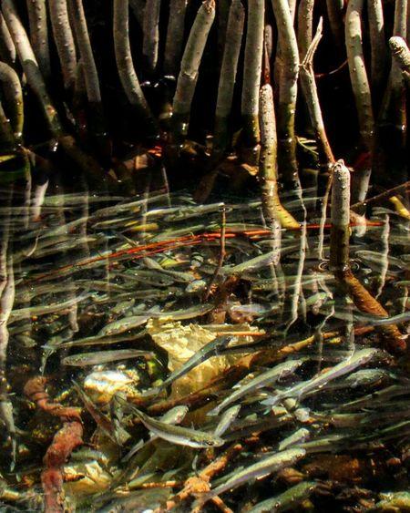 Nature Sardinas Water