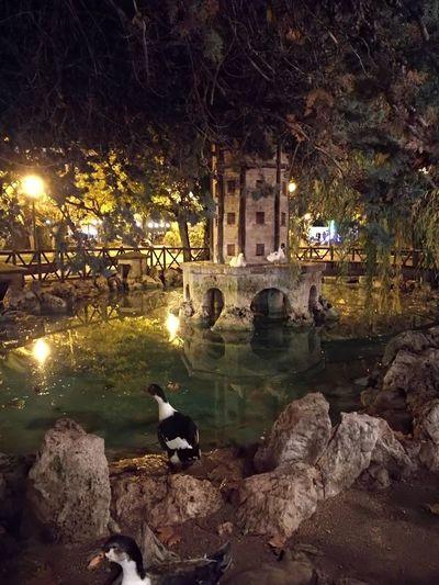 La Glorieta Alcoy Patos Alcoy Holiday - Event Christmas History Architecture Non-urban Scene Fountain