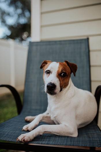 Portrait of dog sitting on seat