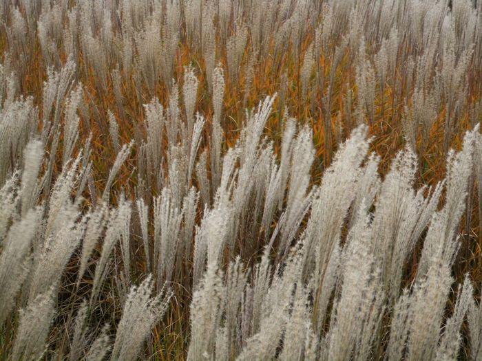 Full frame shot of reeds