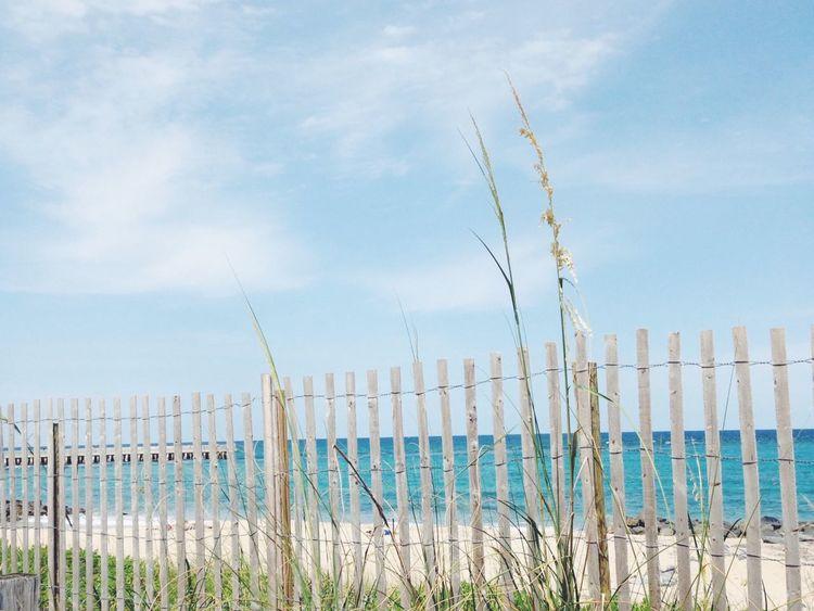 Beach Florida Palm Beach Fence Ocean Tall Grass