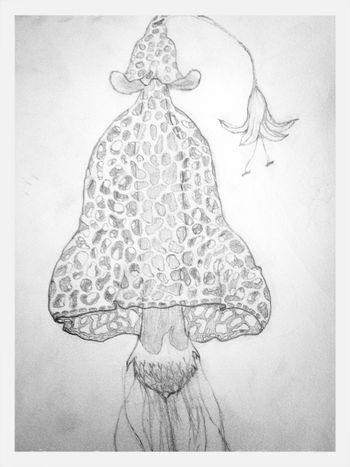 Drawing of my mushroom