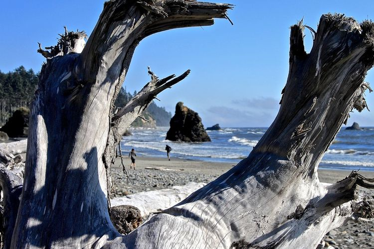 Ruby Beach Nationalpark The Moment - 2015 EyeEm Awards Capture The Moment Protecting Where We Play Beautiful Nature Captured Moment Beautiful Day Beautiful View Ruby Beach Rubybeach Capturing Freedom Adventure Buddies