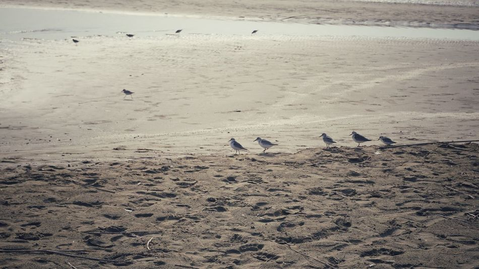 Hungry birds | Bird Beach Animals In The Wild Sand Tranquility Wildlife Beauty In Nature Water Outdoors No People Beauty In Nature Ice Age My Favorite Place Beachtime Getting Inspired Sun Tranquility Bibione Pineda EyeEm Italy|