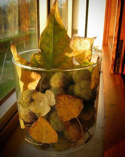 Vasoautunnale Foglie Leaves Colors Colori Jar