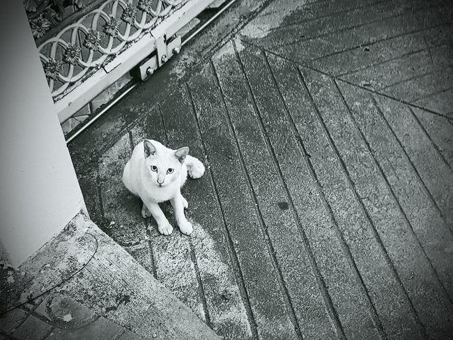 Cat White Blavk And White Thailand Summer Bangkok Thonglor No People