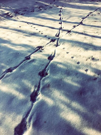The City Light Animal Track Crossroads Winter Nature Perspectives On Nature