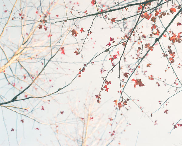 120 Film Autumn Beautiful Beauty Blue Sky Branch Colors EyeEm EyeEm Best Shots EyeEm Gallery EyeEm Nature Lover EyeEmBestPics Fuji Fujifilm Fine Art Photography Leaf Mediumformat Nature Nature_collection Pentax PENTAX67 Photography Pro400H Red The Great Outdoors - 2016 EyeEm Awards