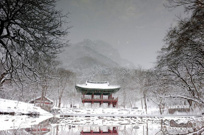 눈 오는 날의 절 Korea Landscape Reflected Glory Winter Snow Cold Temperature Weather Tree No People Nature Day Mountain