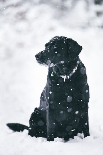 Black dog on snow covered field