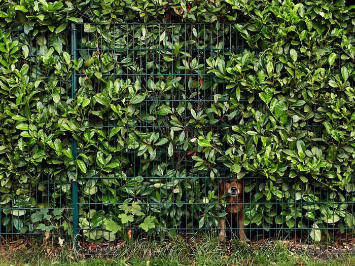 Plants growing on fence