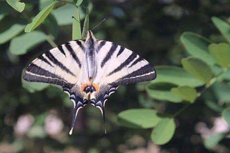 Wings Animal