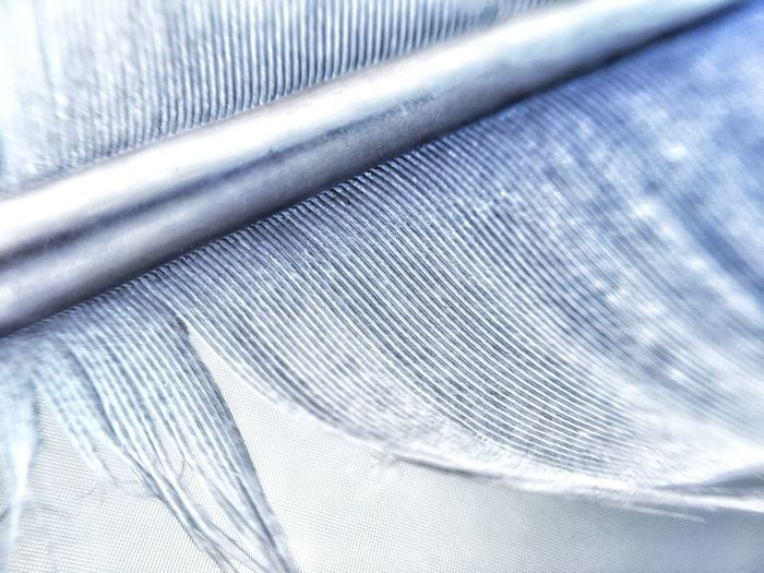 Feather  Broken Wing Silver  Silvery Shiny Shining Nature Feder Natur Silber Glänzend