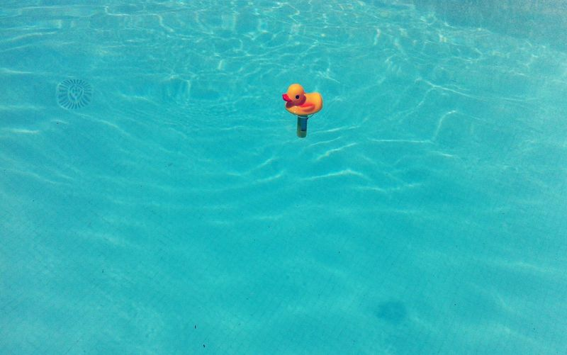 High angle view of rubber duck in swimming pool