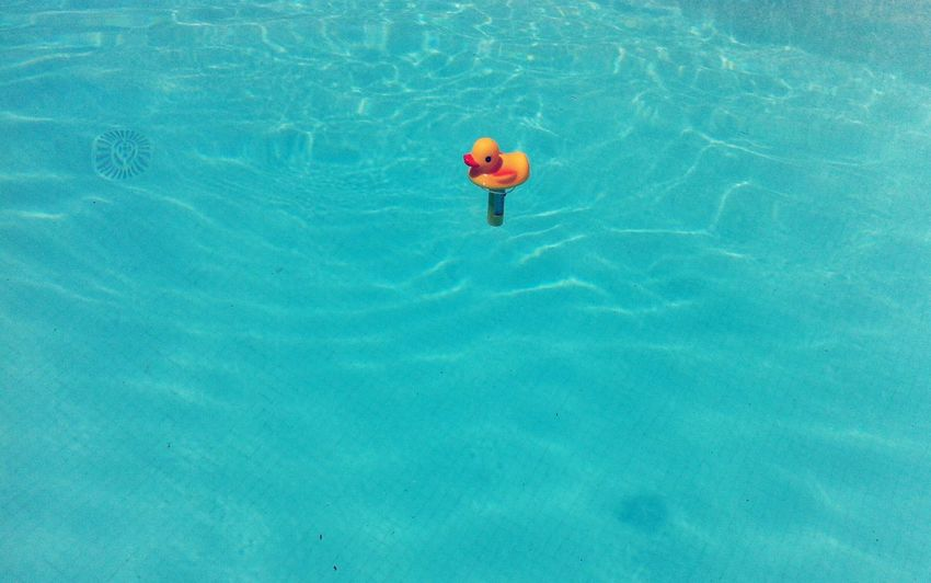 Swimming Pool Water Outdoors High Angle View Swimming Day No People Blue Yellow Duck Thermometer Sommergefühle