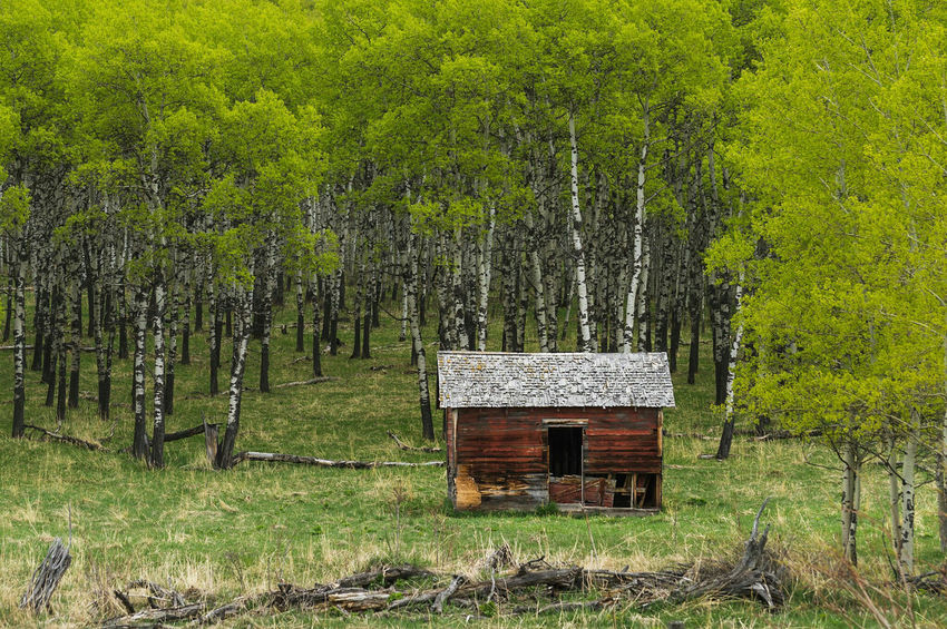 Evergreen. The Great Outdoors With Adobe Adobe Lightroom Mobile Nature Landscape Outdoors Travel Wanderlust Trees Scenery Alberta Canada Cabin In The Woods Rural Field Colour Of Life