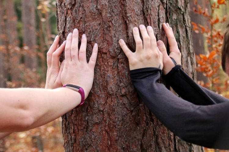 Cropped Hands Of Women Touching Tree