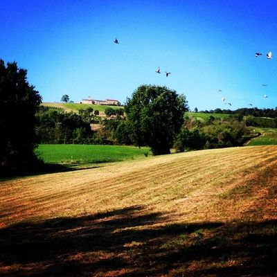 Italy Campagna Hills Iphonography More Colline Reggioemilia Lifeisbeautiful Summer2014 Scandiano Italiancountryside