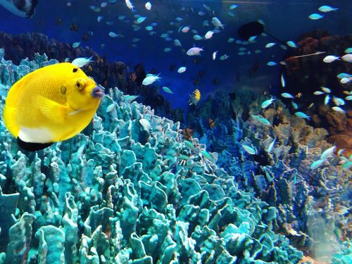假裝自己在潛水 UnderSea Sea Life Underwater Sea Fish Coral Clown Fish Aquarium