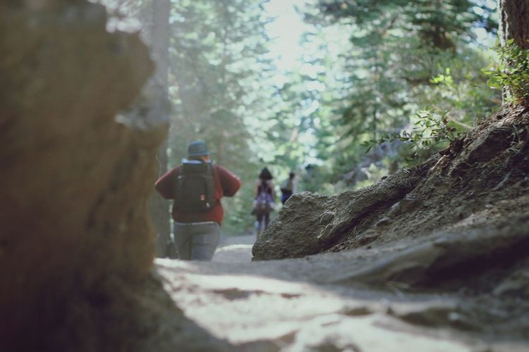 Rear View Of People With Backpack Walking In Forest
