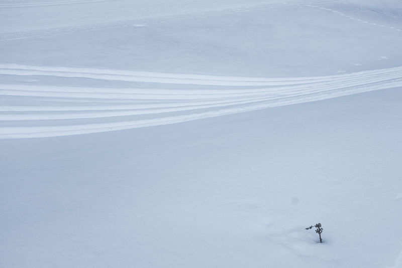 Traces Traces In The Snow Lines Skiing Structure Close-up No People Diagonal Lines Flower In The Snow Diagonal Alone Followme Somewhere Nature Where To Go? Lines And Shapes No One Someone Parallel Lines Moving Sport Deep Snow Shapes And Forms Winter No Filter