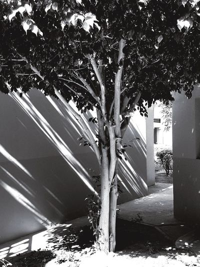 Tree Day No People Outdoors Water Architecture Nature EyeEm Selects EyeEm Diversity House Shaddow Painting Shaddow And Light Shaddows O The Wall Black And White Friday Hotels And Resorts Hotels Area Built Structure Building Exterior Growth Architecture