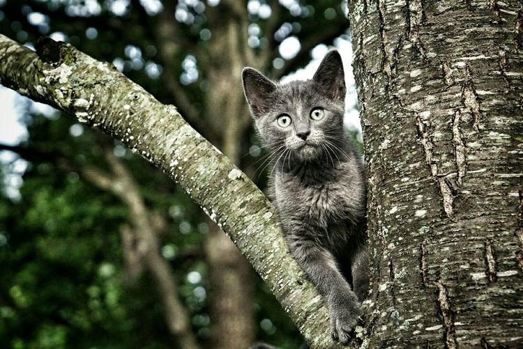 Portrait of a cat in forest