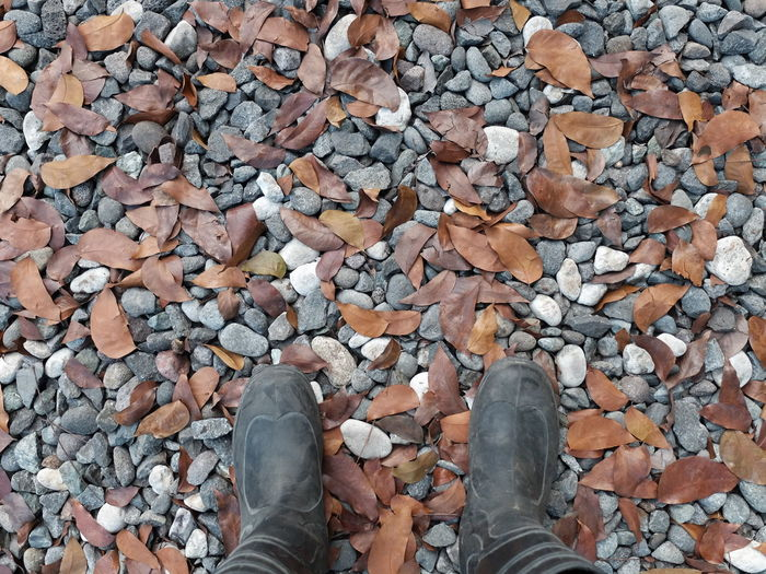 Low section of person standing on fallen leaves over rocks