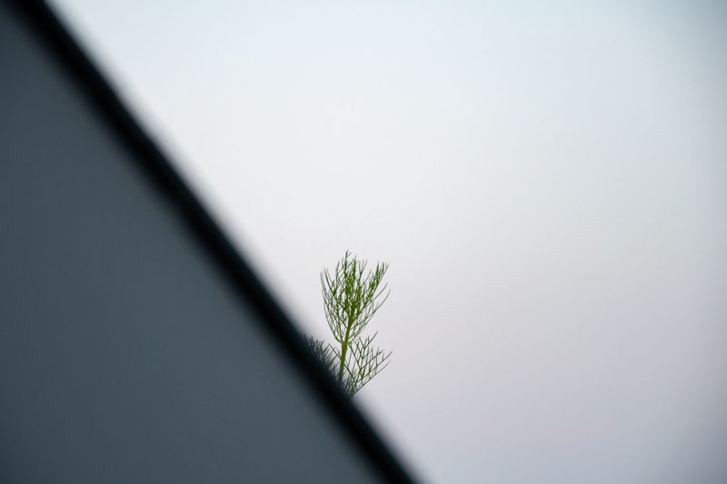 Close-up of potted plant against sky