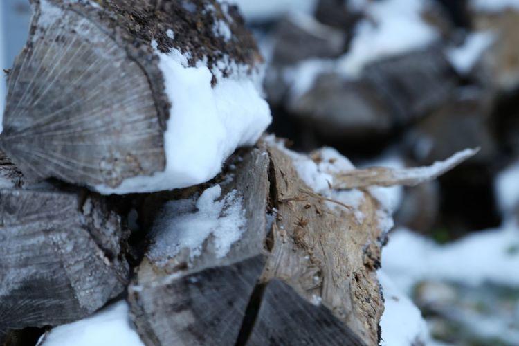 Close-up of snow on log