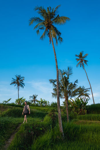 A man next to palm trees in a rice field. Plant Tropical Climate Tree Sky Palm Tree Land One Person Real People Rear View Growth Nature Field Lifestyles Leisure Activity Beauty In Nature Standing Blue Coconut Palm Tree Scenics - Nature Outdoors Hairstyle