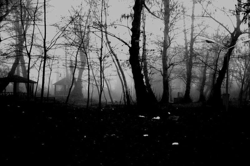Fog Jungle Fog