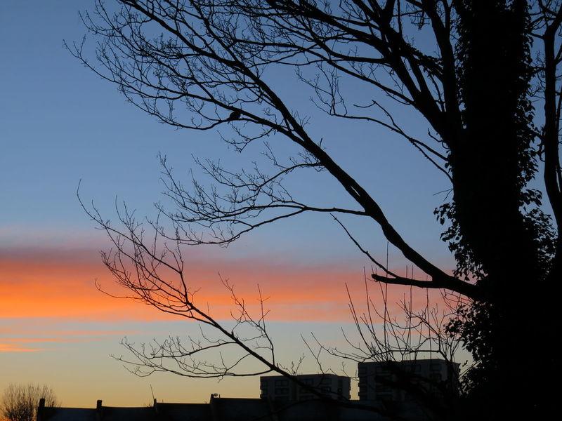 Silhouette Sky Nature Bird Flock Of Birds Outdoors