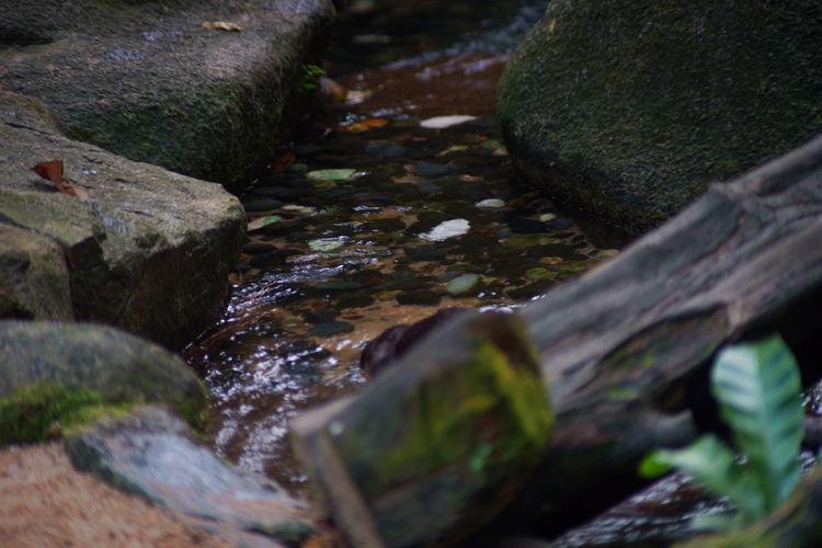 カワウソの居る小川