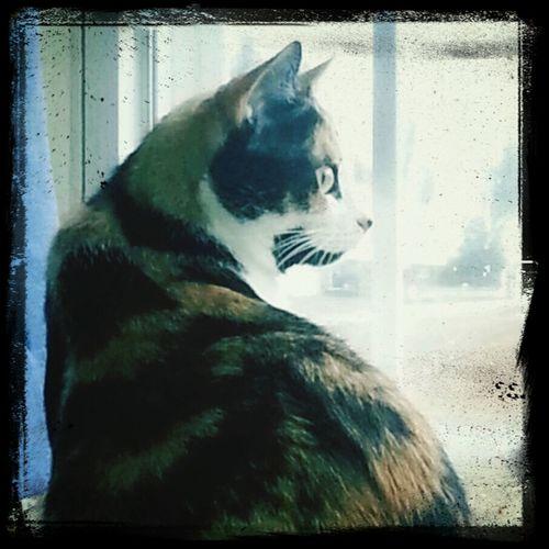 cali my gaurd cat. lol