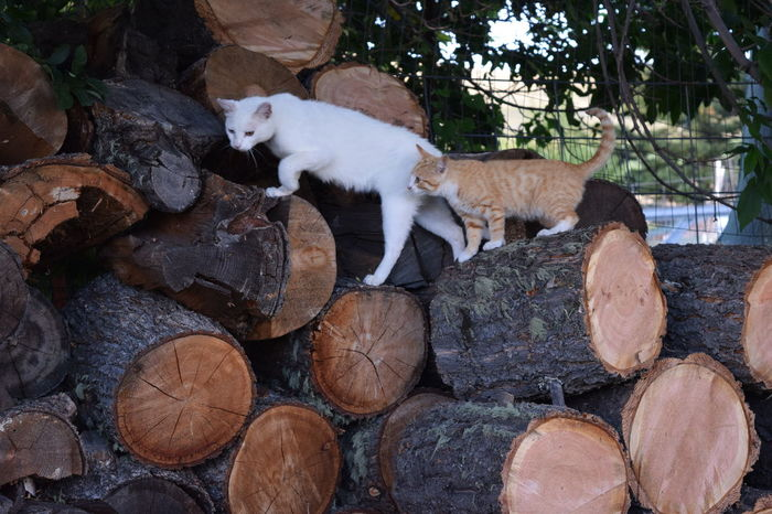 Abundance Cat Close-up Day Domestic Animals Feral Cat Log Mammal Nature No People Outdoors Pets Relaxation Wood Pile