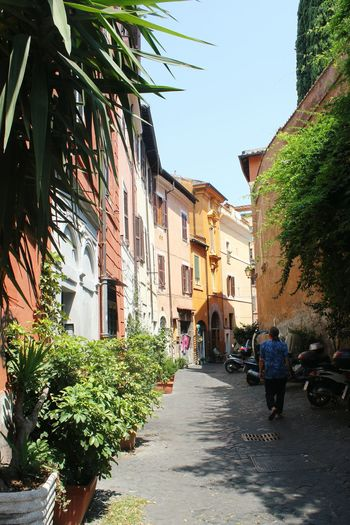 Rome Italy Italia Trastavere Discovering Urban Traveling Exploring Streetphotography Colored Houses Colourful Buildings Pastel Shades Streetview Local Green