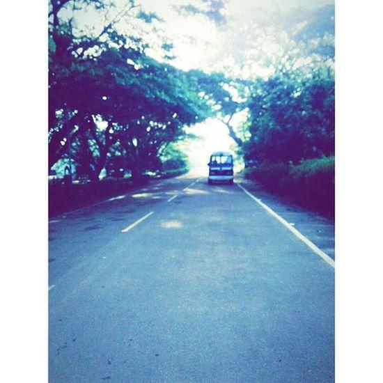 Another Morningwalk Road Treess Nature Love