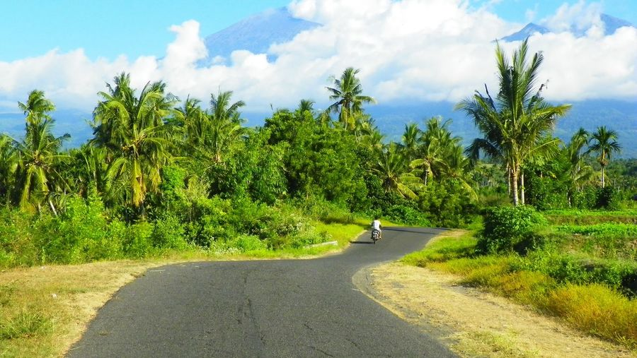 A road in Lombok Beauty In Nature Day EyeEmNewHere Green Color Nature Outdoors Palm Tree Road Scenics Sky The Way Forward Tranquility Tropical Climate