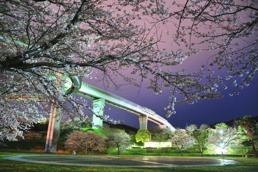 しまなみ海道大三島インター下の多々羅キャンプ場にて。 Rain Cloud Highway Cherry Blossoms Predawn 桜 夜明け前 Landscape