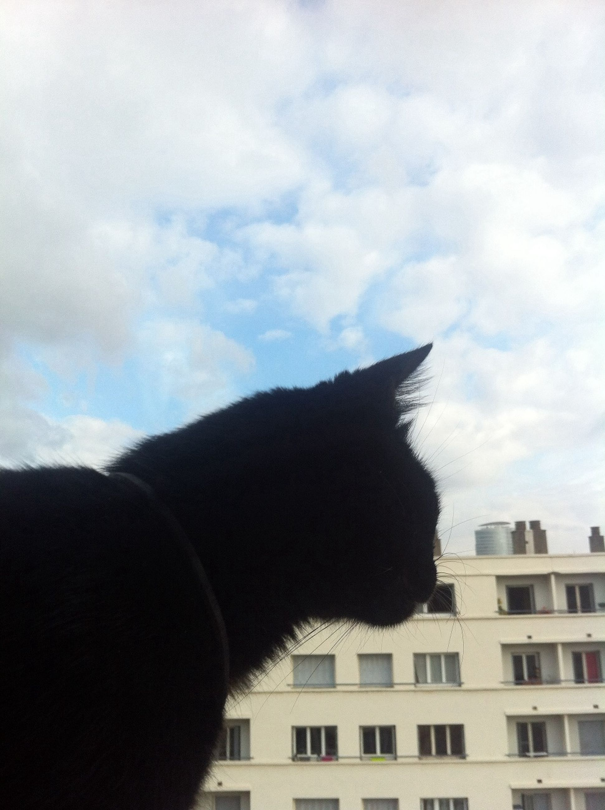 sky, one animal, animal themes, architecture, built structure, low angle view, building exterior, cloud - sky, domestic animals, pets, window, mammal, cloud, domestic cat, cloudy, building, no people, outdoors, silhouette, cat