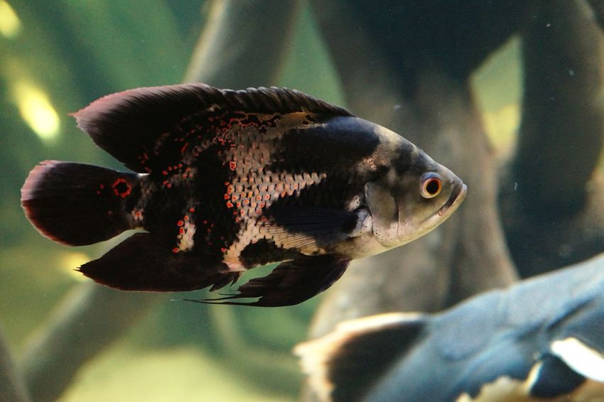 Fish Colour Of Life 2016 Juni Niklas Maximum Closeness BYOPaper! The Week On EyeEm Perspectives On Nature