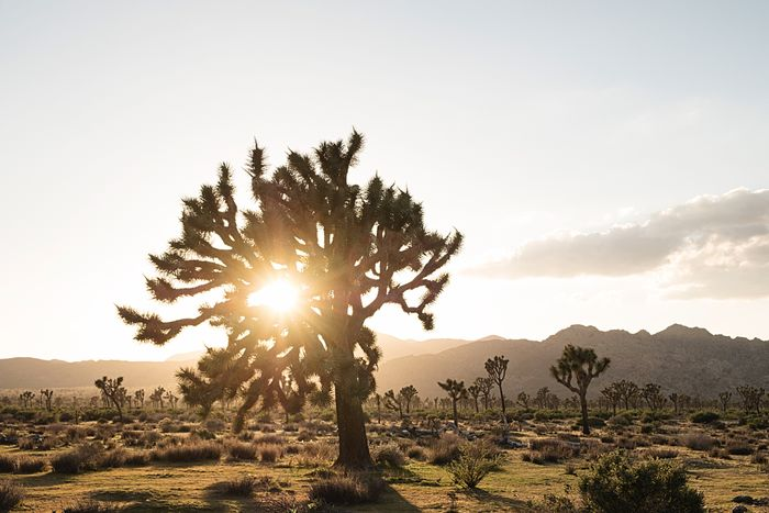 Outstretched arms. Sunlight Tree Sunbeam Nature Landscape Sun Beauty In Nature Tranquility Sky Scenics Tranquil Scene Outdoors No People Sunset Mountain Field Growth Day Travel Destinations Clear Sky California Dreamin