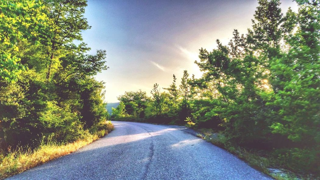 Roadtrip Tree Road Transportation The Way Forward Empty Long Clear Sky Solitude Sunlight Tranquil Scene Growth Tranquility Countryside Remote Plant Diminishing Perspective Day Green Color Sky Green